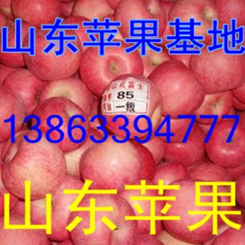 山东红富士苹果冷库现大量出库