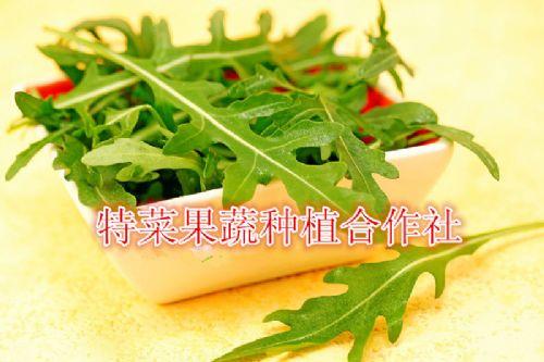 小叶芝麻菜种子