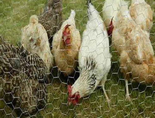 养殖围栏网勾花护栏勾花围网