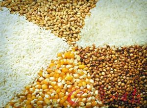 大量求购高粱、小麦、玉米、大米、糯米、碎米