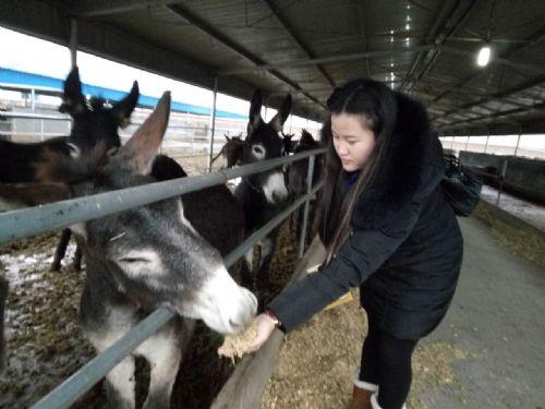 专业生产肉驴饲料的厂家