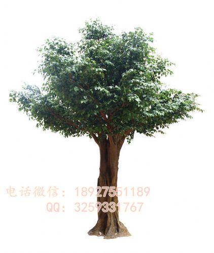 高品质仿真大王椰子树