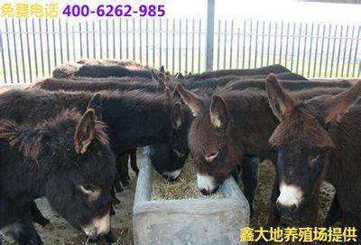 优良肉驴品种德州驴 乌头驴 三粉驴低价销售