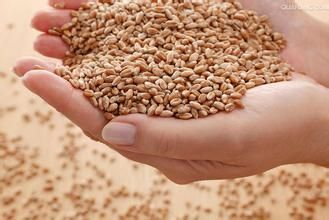 采购高粱、玉米、小(曲)麦、大米稻谷、大豆等原材料