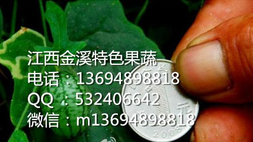 提供优质拇指西瓜种子高产和硬币一样大小是拇指西瓜种子种植促销