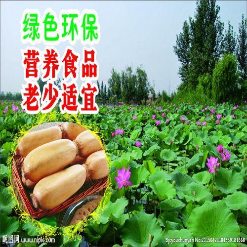 石家庄厂家直销莲藕专用鸡粪有机肥 生物发酵鸡粪