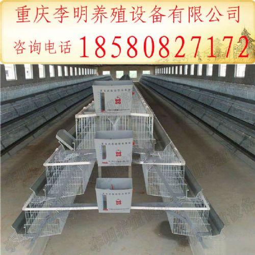 鸡笼 养殖设备 蛋鸡笼 阶梯式蛋鸡笼 层叠式蛋鸡笼 镀锌蛋鸡笼