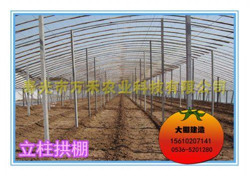 拱棚|立柱拱棚|钢管立柱拱棚|寿光市万禾农业科技有限公司